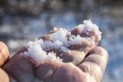 Vit snö på en hand i en vinterskog fotografering för bildbyråer