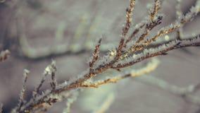 Vit snöflinga på trädfilial royaltyfria bilder