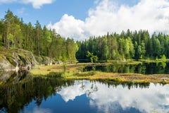 Vit sommar fördunklar att reflektera på skogdammet royaltyfri bild