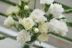 Vit sommar Tid för blom för bukett för nejlikaDianthusblomma Arkivfoton