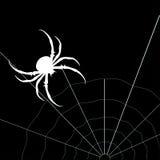 Vit spindel på den svarta bakgrunden kvinna för vektor för attraktiv asksilhouette sittande Arkivbild