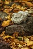 Vit sten som ligger på en mörk sten på höstsidor Arkivbilder