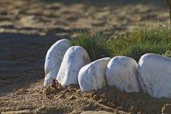 Vit stenar blomsterrabatten på en sandig kust Royaltyfri Foto