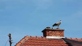 Vit stork stock video
