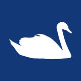 Vit svan på en blå bakgrund Arkivfoton
