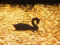 Vit svansegling på en sjö Royaltyfri Bild