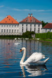 Vit swan med reflexion royaltyfria foton