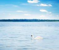 Vit swan som flottörhus på den wood laken arkivfoton
