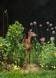 Vit-tailed doe i trädgård royaltyfria bilder