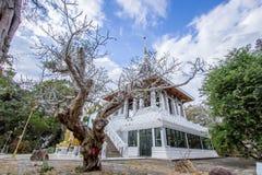 Vit tempel i yasothon Thailand Royaltyfri Bild