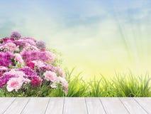 Vit terrass med blomsterrabattsommarblommor och gräs Fotografering för Bildbyråer