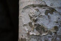Vit textur för foto för trädskäll Blek grå trädstam på svart bakgrund fotografering för bildbyråer