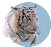 Vit tiger på en blå bakgrund Arkivbilder