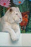 Vit tiger på Las Vegas Royaltyfria Foton