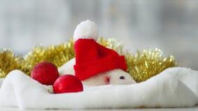 Vit tjaller med den röda julhatten stock video