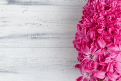 Vit träbakgrund med den rosa hyacintblomman Royaltyfri Foto