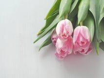 Vit träbakgrund med gruppen av nya tulpan Royaltyfria Bilder