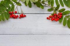 Vit träbakgrund med rönnbär fotografering för bildbyråer