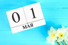 Vit träkalender med texten på ryss: Maj 1 Vita blommor av påskliljor på en blå trätabell Arbets- dag och vår Arkivbild