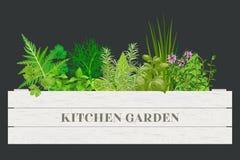 Vit träspjällåda av nya matlagningörter för lantgård med etiketter i träask Grönskabasilika, rosmarin, gräslökar, timjan, oregano Royaltyfria Bilder