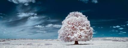 Vit tree Arkivfoto