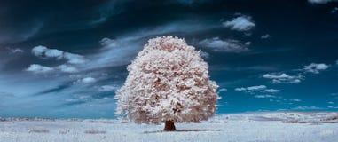 Vit tree Royaltyfri Foto