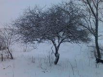 Vit tree Arkivfoton