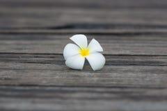 Vit tropisk blomma på den gamla wood bakgrunden för grunge Arkivbild