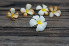 Vit tropisk blomma på den gamla wood bakgrunden för grunge Royaltyfri Bild