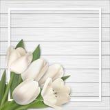 Vit tulpanbukett på träbakgrund Royaltyfri Foto