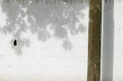 vit vägg med en trästam royaltyfria foton