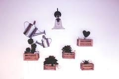 Vit vägg med träaskar med gröna blommor, kakturs och ir Royaltyfri Bild
