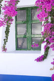 Vit vägg med violetta flowres Royaltyfri Foto