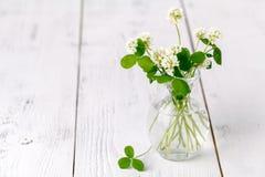 Vit växt av släktet Trifolium i en glass tillbringare på trätabellen Arkivbilder