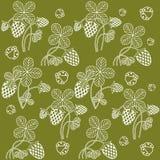 Vit växt av släktet Trifolium på kaki- bakgrund Royaltyfria Bilder