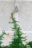 Vit växt för vägggräsplanmurgröna Royaltyfri Foto