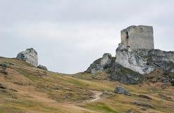 Vit vaggar och den fördärvade medeltida slotten Royaltyfria Foton