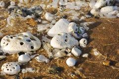 Vit vaggar och vatten på stranden Fotografering för Bildbyråer