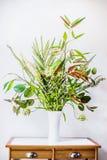 Vit vas med gruppen av den olika gröna växten på tabellen Blomsterhandlareordningar med variation av gröna tropiska växter Hem- d arkivbilder