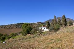 Vit villa och olivgröna dungar arkivbilder