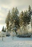 vit vinter Arkivfoto