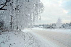 vit vinter Arkivbilder