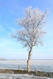 vit vinter för liggandetree Arkivfoton