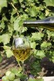 vit wine för druva royaltyfri foto