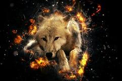 vit wolf Royaltyfria Bilder