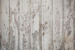 Vit wood texturbakgrund med naturliga modeller royaltyfria bilder