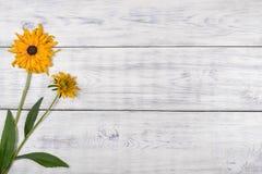 vit yellow för bakgrundsblomma Arkivfoto