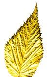 vit yellow för bakgrundsleaf Fotografering för Bildbyråer