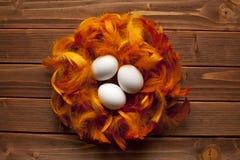 Vita ägg och fjädrar Fotografering för Bildbyråer