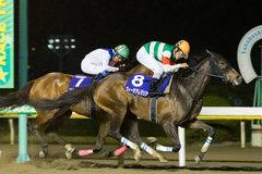 Vita Allegria wins Marine Cup at Funabashi Racecourse in Japan Royalty Free Stock Photography